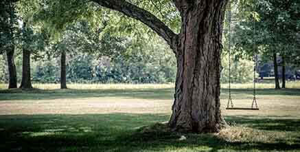 Les espaces verts en copropriété